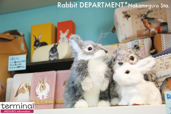 rabbitA1